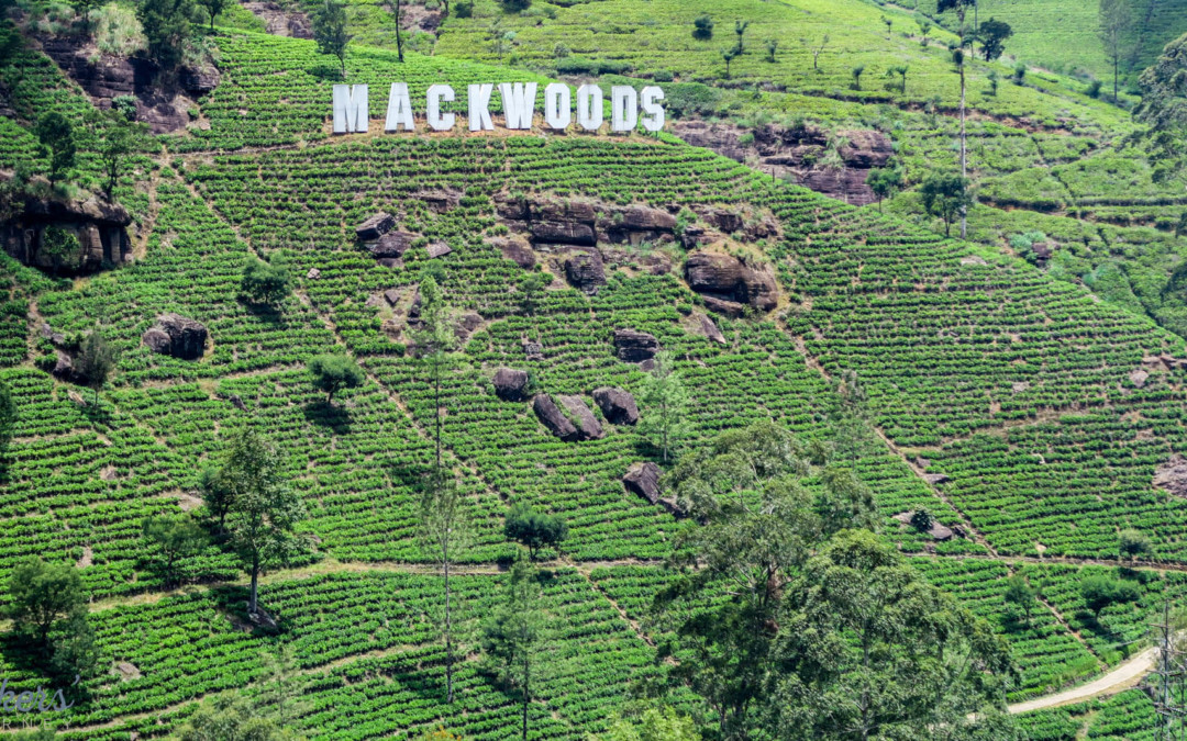 Exploring Sri Lanka's Tea Plantations