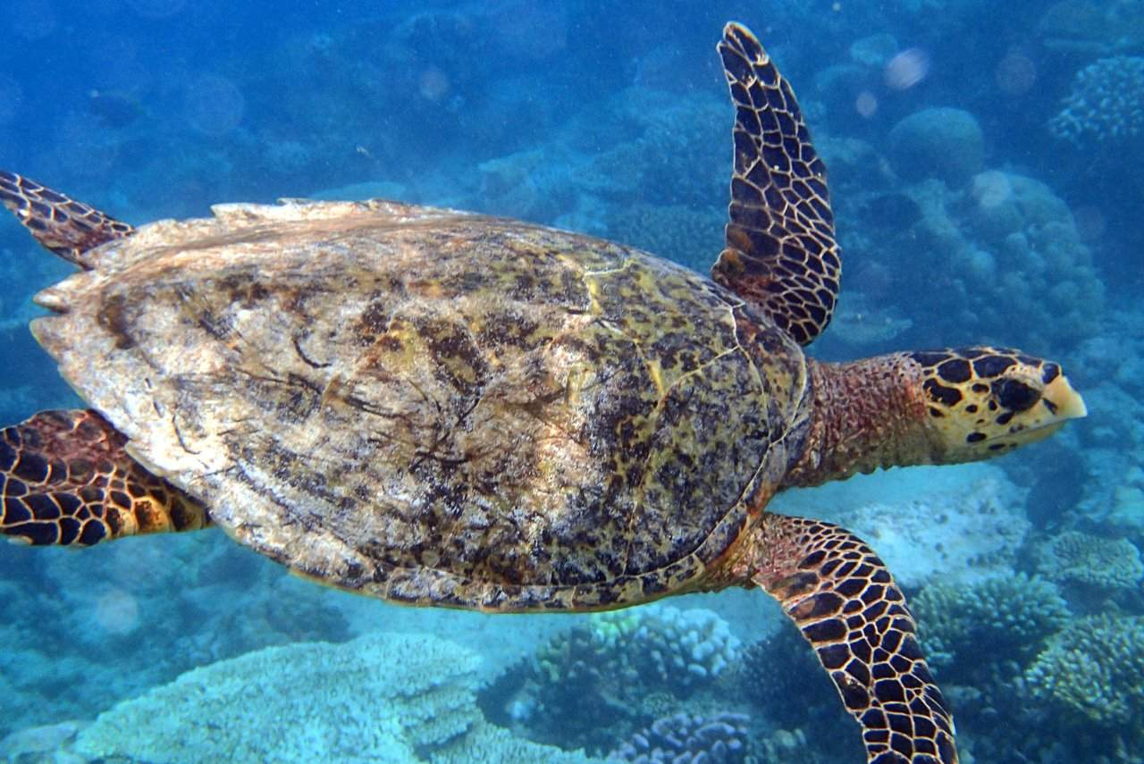 More from the Maldives: Cocktails and Turtles