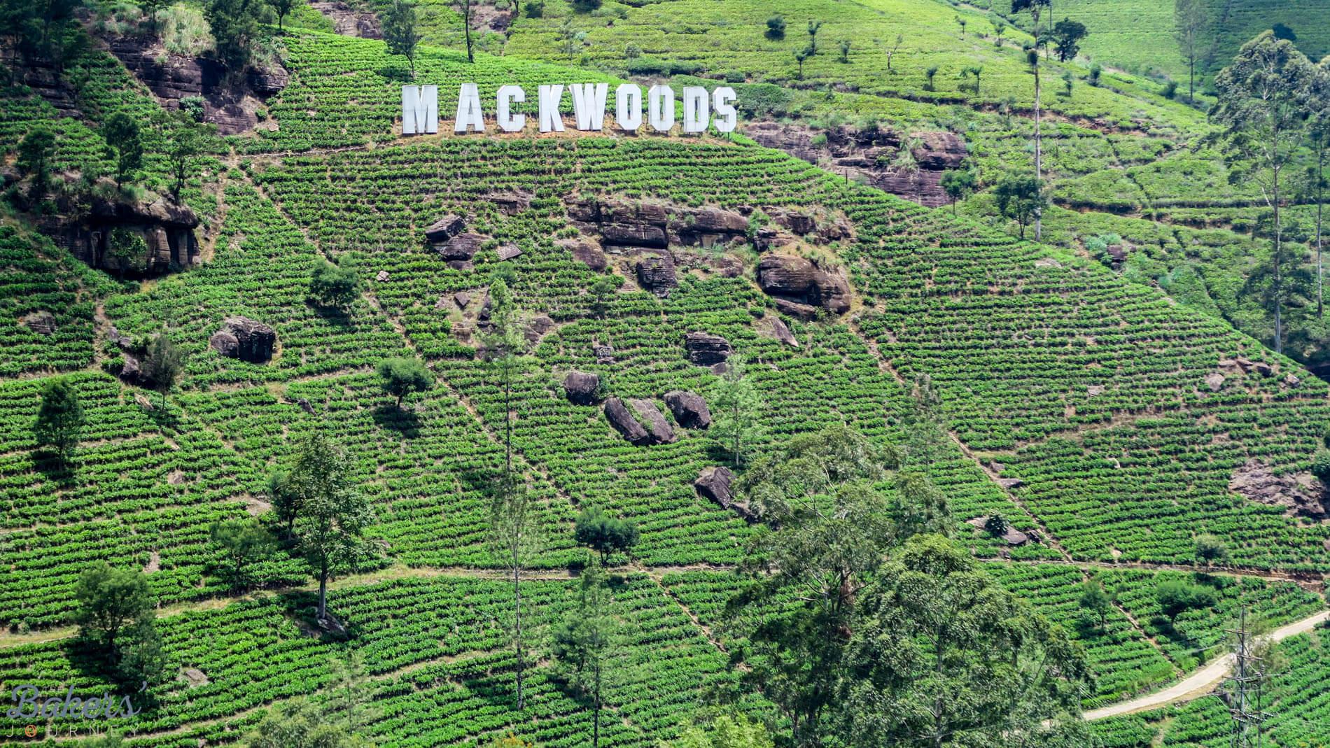 Exploring Sri Lanka's Tea Plantations